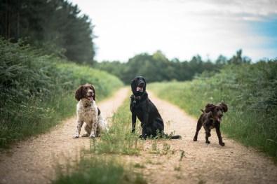 The-Norfolk-Dog-Photographer-0003