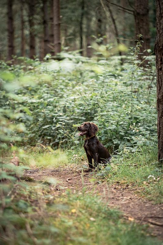 The-Norfolk-Dog-Photographer-0020