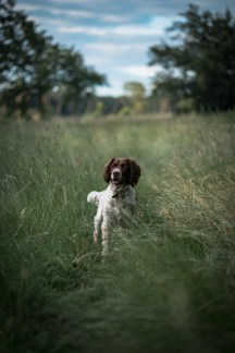 The-Norfolk-Dog-Photographer-0030