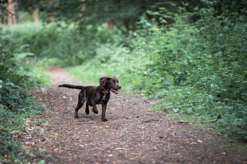 The-Norfolk-Dog-Photographer-0032