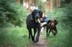 The-Norfolk-Dog-Photographer-0047