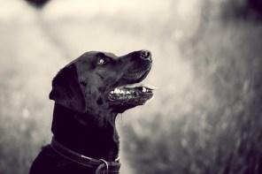 The-Norfolk-Dog-Photographer-0049
