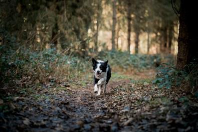 The-Norfolk-Dog-Photographer-0008
