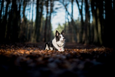 The-Norfolk-Dog-Photographer-0026