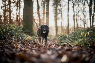 The-Norfolk-Dog-Photographer-0018