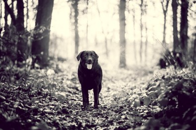 The-Norfolk-Dog-Photographer-0019