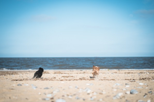 The-Norfolk-Dog-Photographer-0021