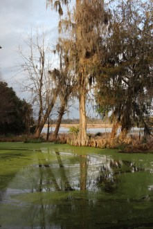 A view over a pond toward the Ashley River