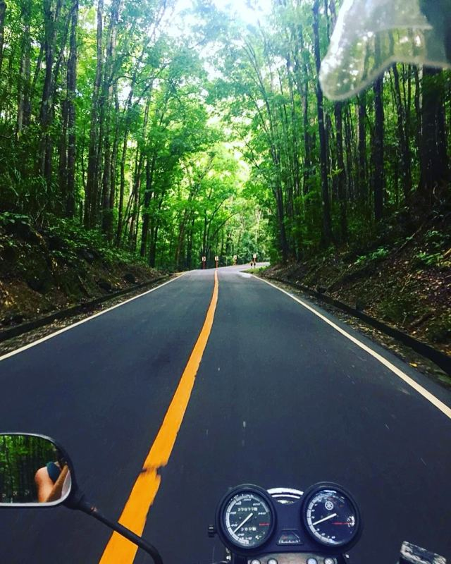 Best things to do in Bohol forest