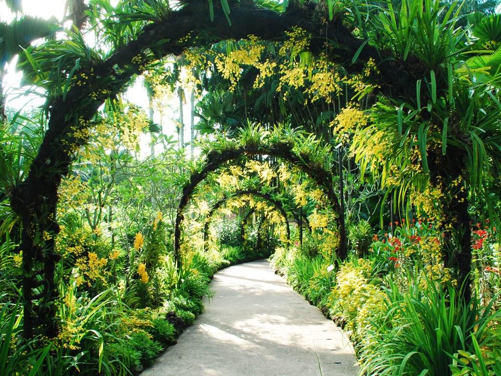 botanic gardens singapore, top things to do in Singapore, singapore skyline, singapore flyer, singapore city, weather in singapore, singapore restaurant, singapore, where is singapore, things to do in singapore, singapore hotels, singapore hotel