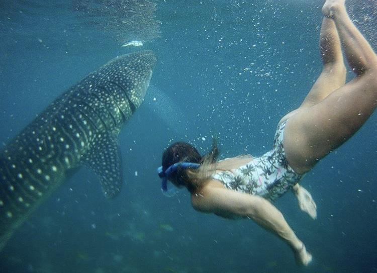 3 week itinerary philippines, oslob cebu, oslob, oslob philippines, oslob whale sharks, oslob whale shark, safari resort oslob, oslob cebu philippines, whale sharks oslob, whale shark oslob