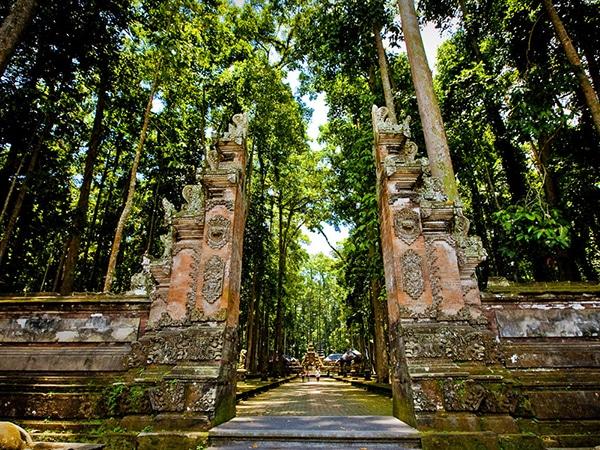 monkey forest bali, ubud bali monkey forest,monkey forest bali cost,ubud monkey forest bali ,sacred monkey forest bali ,bali ubud monkey forest ,monkey forest bali ubud,bali monkey forest ubud,monkey forest bali entrance fee, monkey forest in ubud
