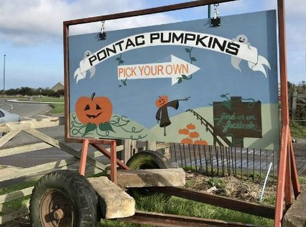 Pontac pumpkins sign