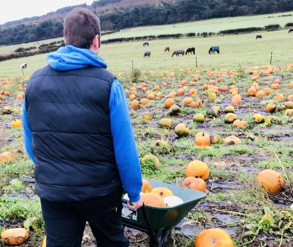 Damion pushing wheel barrow in pumpkin field