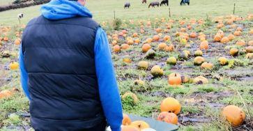 Damion pushing wheel barrow in pumpkin field