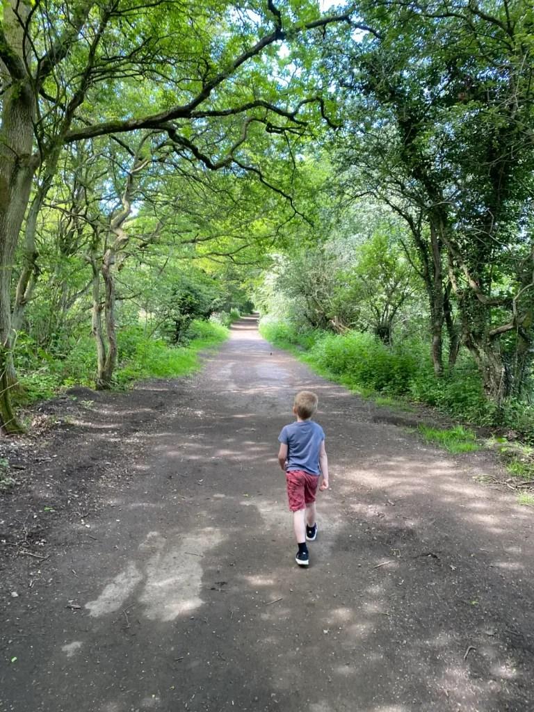 Alfie Walking In Flatts Lane Country Park