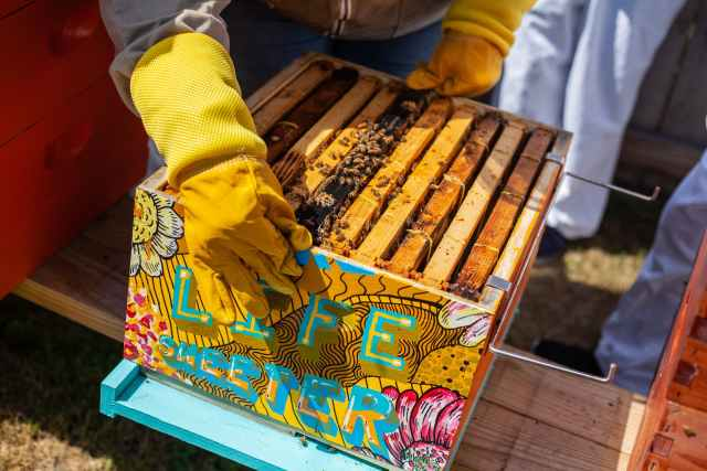 brown wooden crate with bees