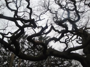 Sherwood Forest Trees