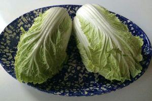 NE_Napa Cabbage 6