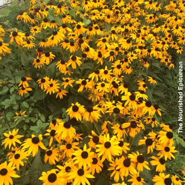 17-1_cover-photo_mood-boost-sunflowers