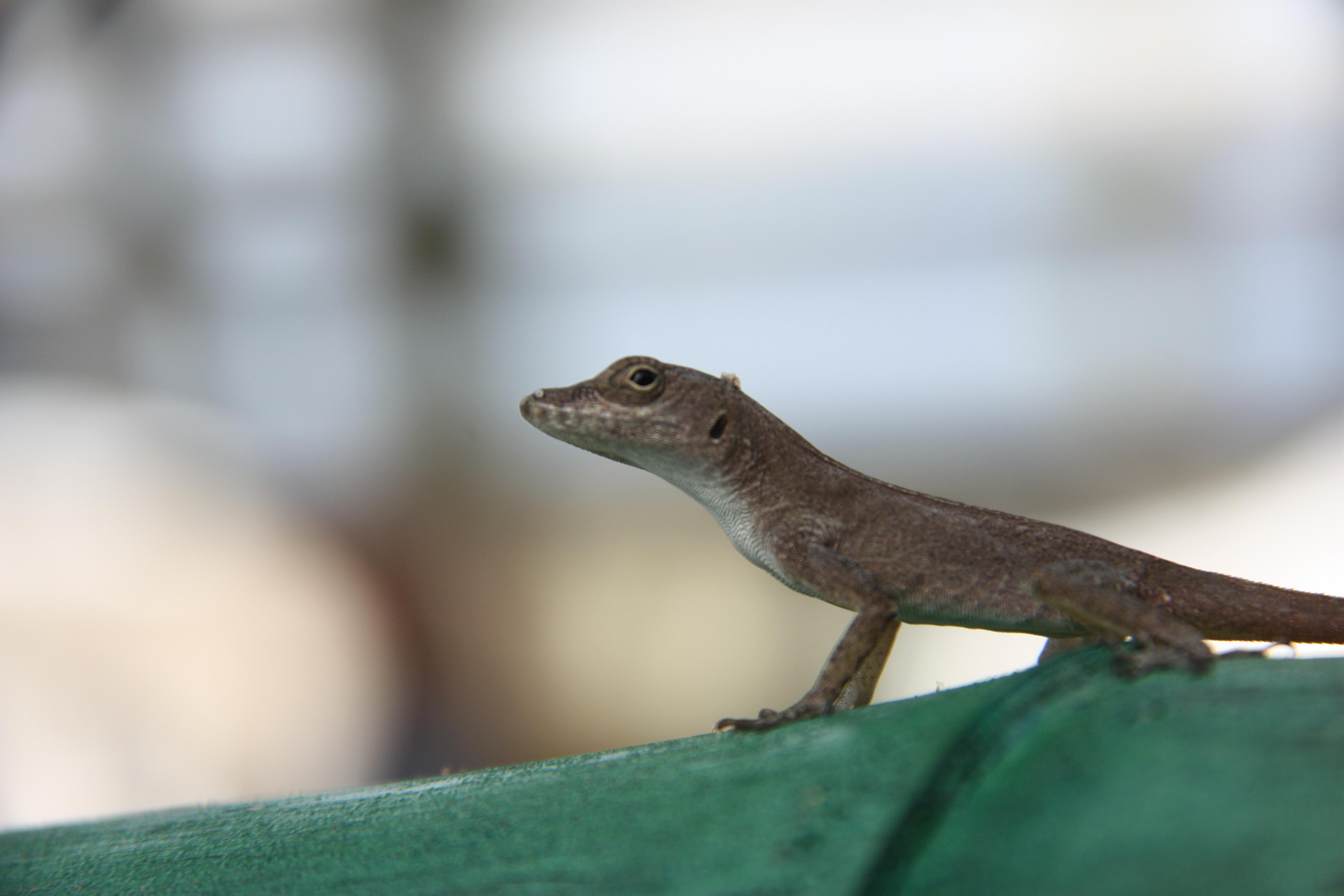 Puerto Rico Wildlife