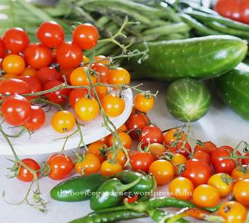cherry tomatoes fall harvest