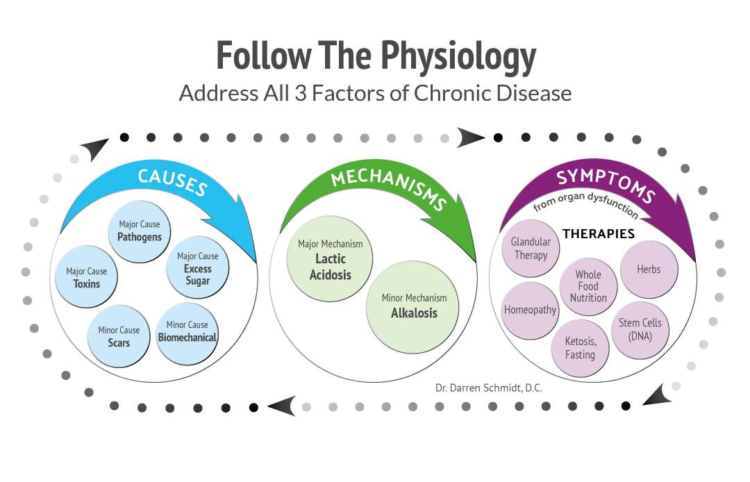 follow-the physiology graphic
