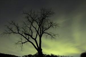 """Green Lights"""