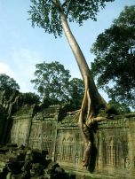 Preah Kahn, Angkor, Cambodia