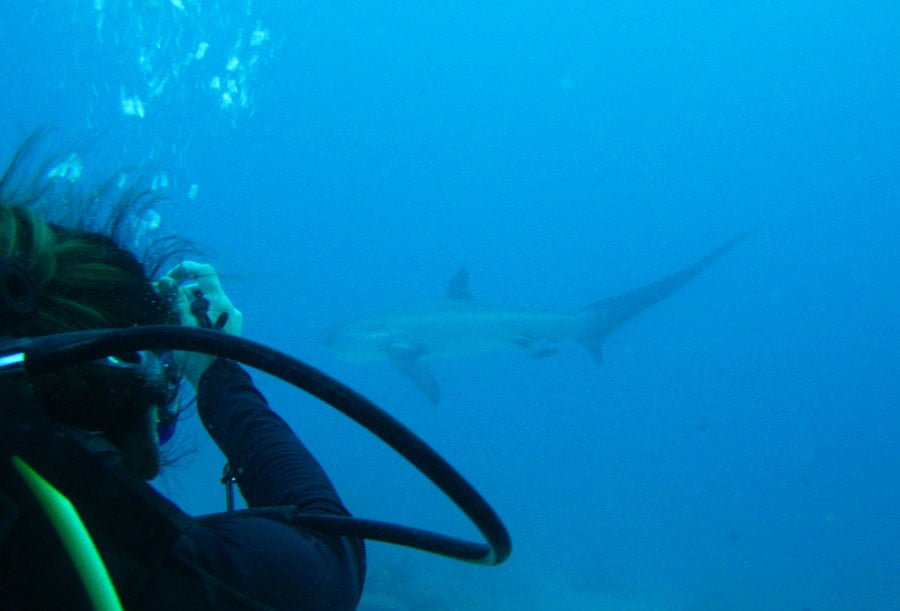 Malapascua Thresher Shark Diver