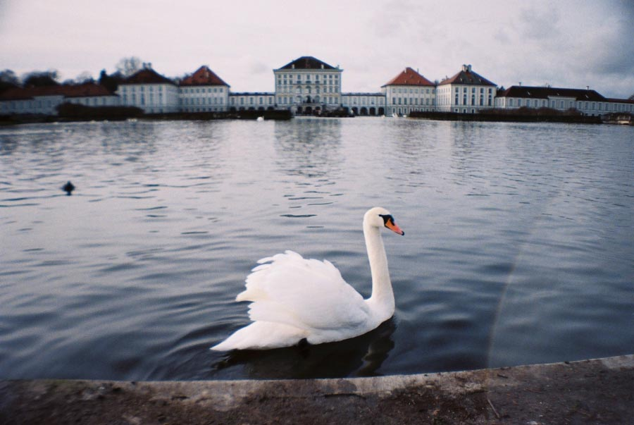 Munich Nymphenburg Palace Swan