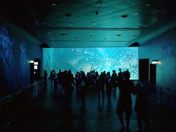RWS Ocean Dreams