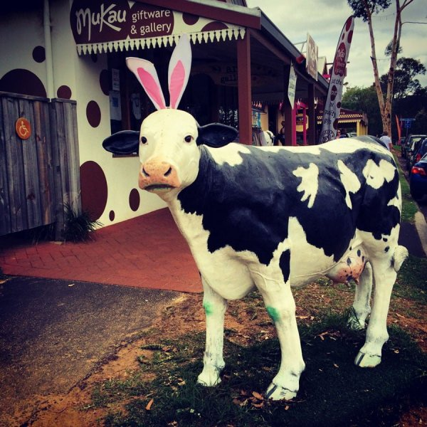 Perth Margaret River Cowaramup Easter Cow