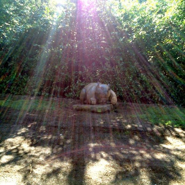 Daylesford Wombat Hill Wombat