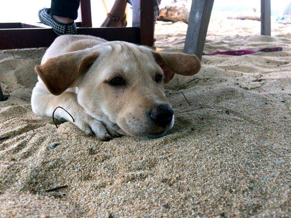 Koh Samui - RNavigator Think Cafe Dog