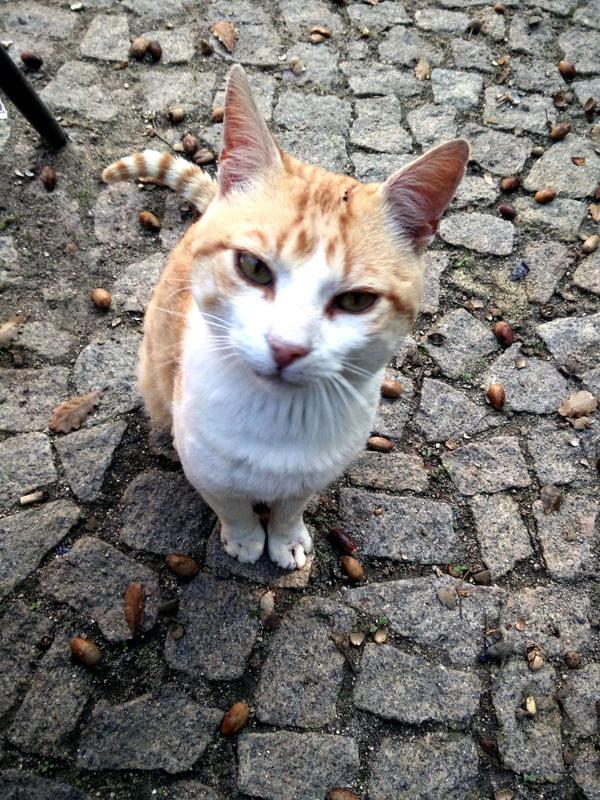Portugal - Sintra Moorish Castle Judging Cat
