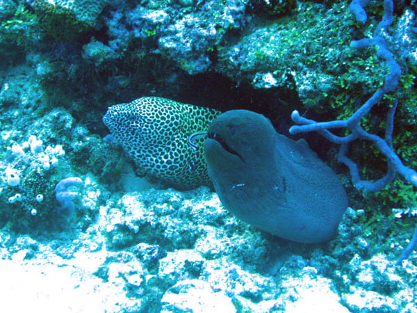 Club Med Kani Maldives - Diving 2 Eels