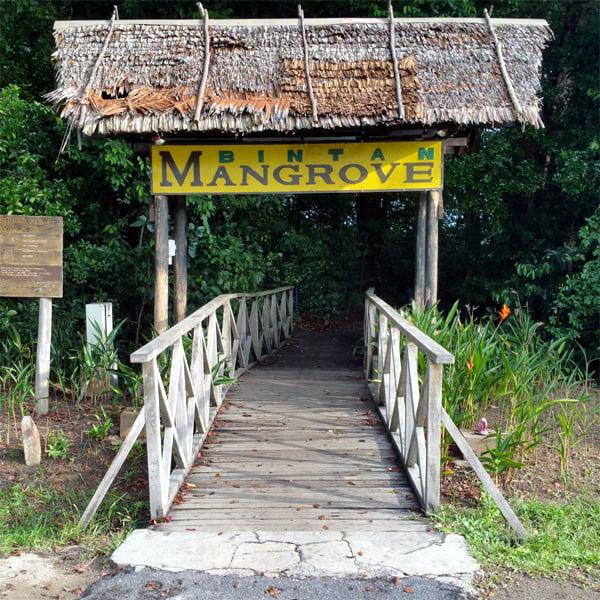 Bintan Mangrove Sign