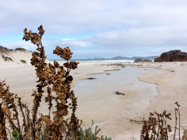 Gippsland Wilsons Promontory Squeaky Beach