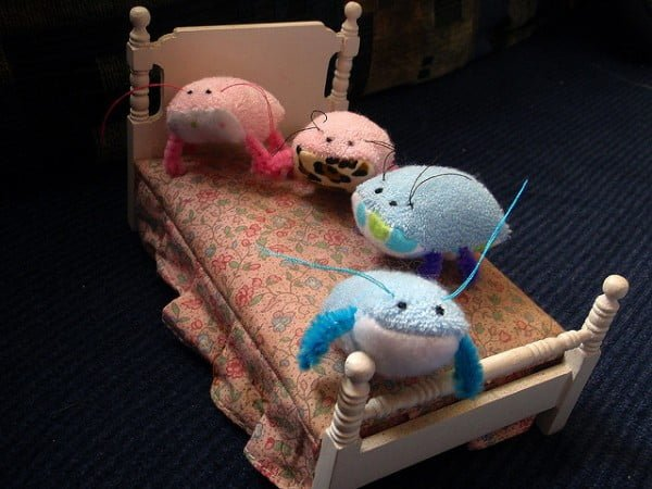 Bed Bugs - Cute - Flickr Mandy Jouan