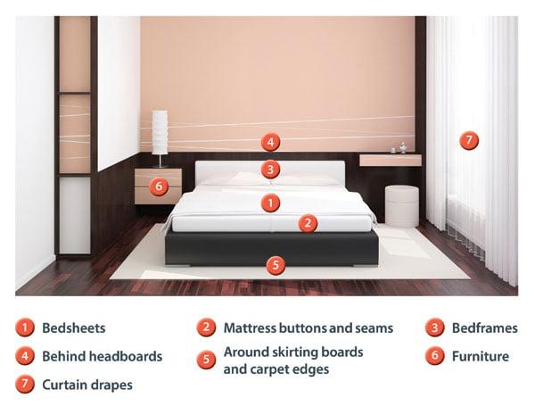 Bed Bugs - Diagram Rentokil