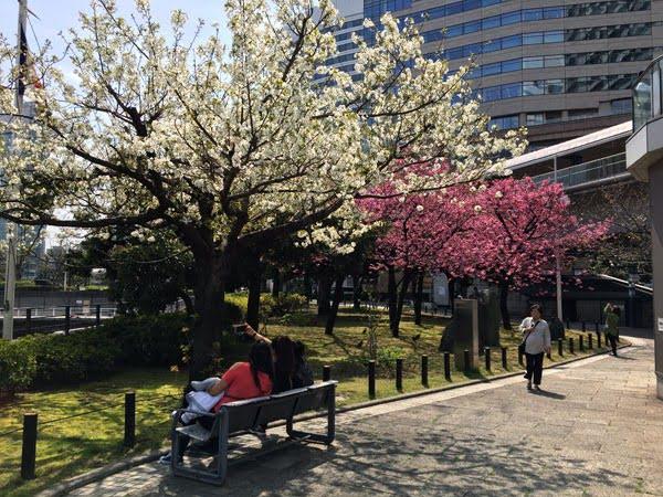 Tokyo Yokohama Sakura Pink-White