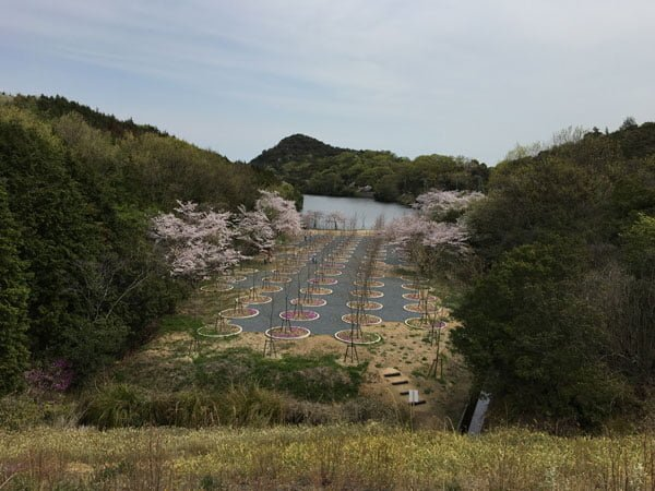 Setouchi Triennale 2016 - Naoshima Cherry Blossom Maze