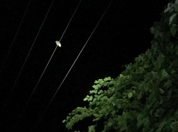 Taiwan Lanyu Night Tour Owl