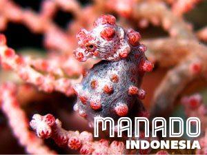 Manado, Sulawesi, Indonesia