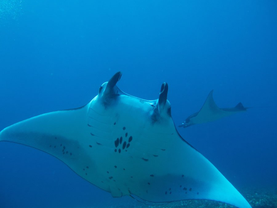 Why you need to go scuba diving in Komodo
