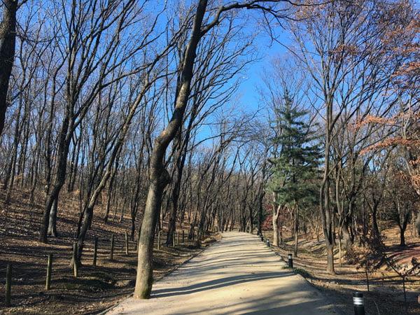 Seoul Samneung Park Trees