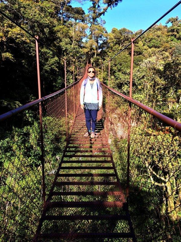 Panama Boquete Tree Trek