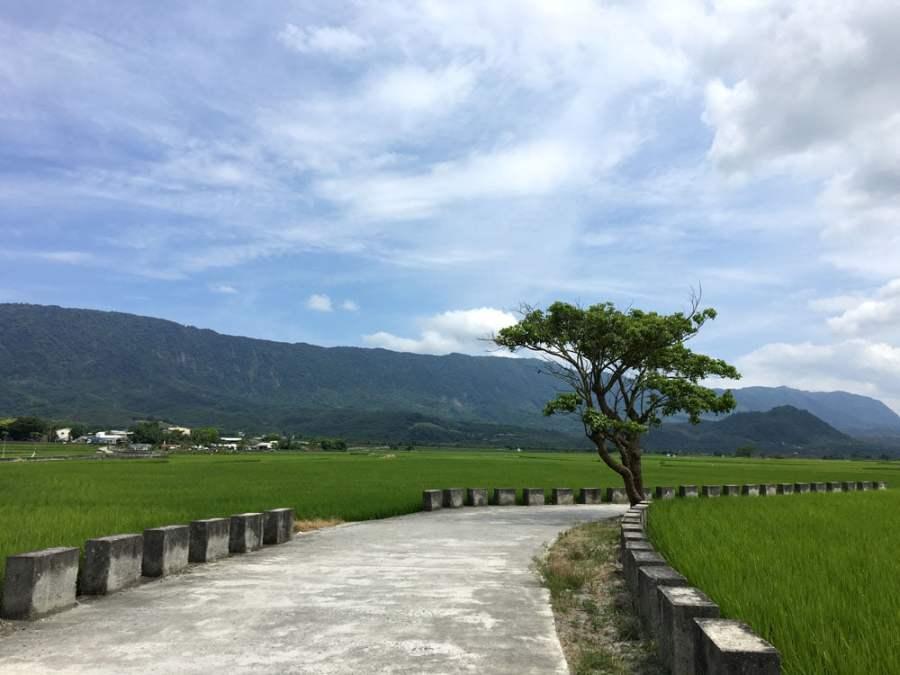Taitung Chishang Heaven Road Tree