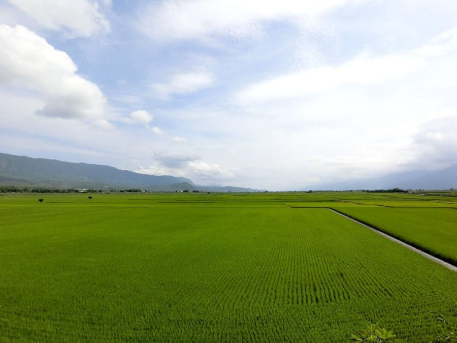 Taitung Chishang Rice Fields